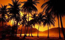 Palm Tree Desktop Wallpaper | Palm Tree Images | Cool Wallpapers 837