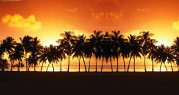 Palm Tree Beach Sunset Wallpaper Beach sunset palm tree high 249