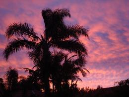 Description Palm tree against sunset sky2153779515jpg 394