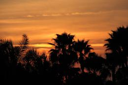 Home | palm trees sunset Gallery | Also Try: 1162