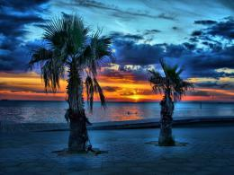 palm trees sunset pictures palm trees sunset pictures palm trees 1750