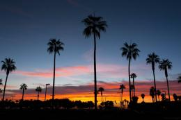 PanoramioPhoto of Palm trees at sunset in Mission Bay 1954