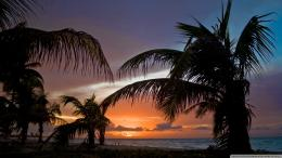 Beach Sunset Palm Tree for Pinterest 275