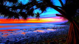 pictures palm trees sunset pictures palm trees sunset hd wallpapers 668