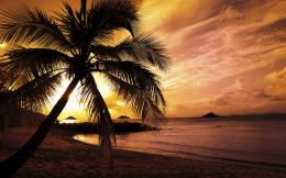 Sunset Palm Trees Hd Sunset Palm Trees HD 2560x1600 #470 1047