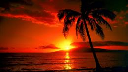 Palm Tree Sunset Wallpaper 494