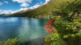 Download Peaceful lakescape in summer wallpaper in Nature wallpapers 736