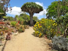 Desert Plants Path by Britstock 233