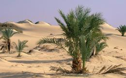 sahara desert plants image search results 1380