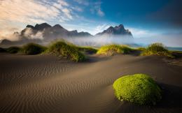 Green Desert Plants wallpapers | Green Desert Plants stock photos 1874