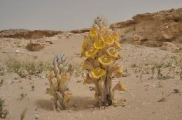PicturesPool: Desert Plants,Flowers,Trees 738