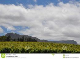 Rain clouds over the vineyards and mountains in south africa 1415