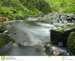 Mountain Stream In Fresh Green Leaves Forest After Rainy DayRoyalty 1670