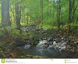 Mountain Stream In Fresh Green Leaves Forest After Rainy DayStock 574