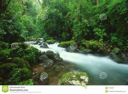 Stream In Rain Forest,Costa Rica Stock ImagesImage: 7942954 1792