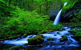 rain forest falls stream high definition wallpaper 1258