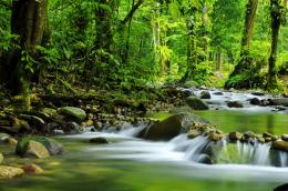 River with tropical rainforest beautiful wallpaper 274