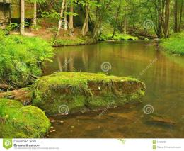 Mountain stream in fresh green leaves forest after rainy dayFirst 389