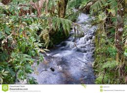 More similar stock images of ` Rain forest stream ` 1294