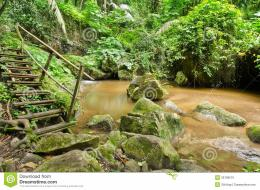Stream In Tropical Rain Forests Royalty Free Stock PhotoImage 1375