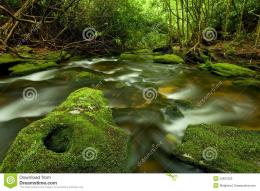 Rain Forest Stream Royalty Free Stock PhotoImage: 22627355 1745