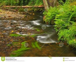 Mountain stream in fresh green leaves forest after rainy dayFirst 913
