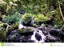 Stock Photos: Rain forest stream 451