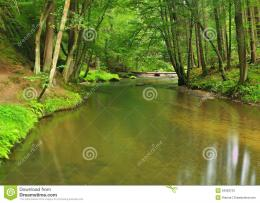 Mountain Stream In Fresh Green Leaves Forest After Rainy DayStock 278
