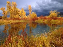 Pond reflections trees water storm clouds wallpaper 723