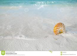 Nautilus shell on white beach sand, against sea waves, shallow dof 166