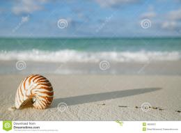 Nautilus Shell On White Beach Sand, Against Sea Waves Stock Photo 187