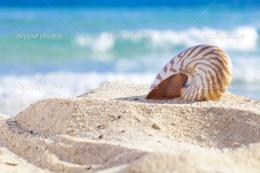 Beach Waves Sand Shells 1387