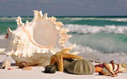 sea shells sea beach sand wallpaperView All 329