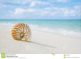 Nautilus shell on white beach sand, against sea waves, shallow dof 1227