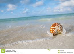 Nautilus shell on white beach sand, against sea waves, shallow dof 156