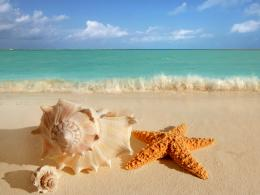 Pin Wallpaper Shells Starfish Sea Ocean Waves Sand Beach Hd Desktop on 1004