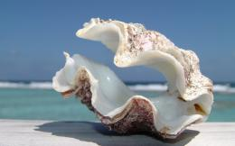 Big Shell Beach Wallpapers Pictures Photos Images 1321