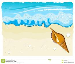 Sea Shell On The Beach With Wave And Sand Stock PhotoImage 382