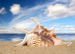 23589 beach sand and shells | CafleurebonPerfume and Beauty Blog 1762