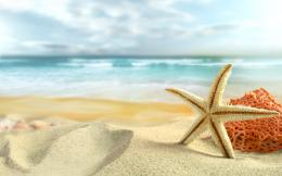 Ocean sand stars starfish sea beaches wallpaper | 1680x1050 | 184243 1289