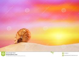 Nautilus Shell On White Beach Sand, Against Sea Waves Stock Photo 1889