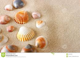 Sea Shells On Sand At The Beach Royalty Free Stock PhotosImage 1481