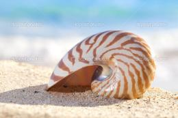 Nautilus shell on a beach sand, against sea waves, shallow dofStock 1748