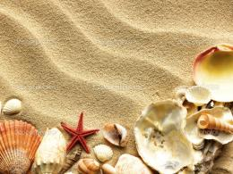 Sea shell on sand — Stock Photo © Irochka #5921693 1117