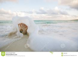 Nautilus Shell On White Beach Sand Rushed By Sea Waves Stock Photo 1034