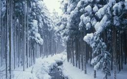 Snow Covered Forest Path Hd Wallpaper   Wallpaper List 627