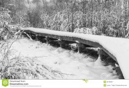 Snow covered wooden boardwalk or pathway surrounded by trees 1260