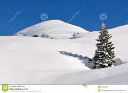 One fir covered mountain snow under a blue sky 244