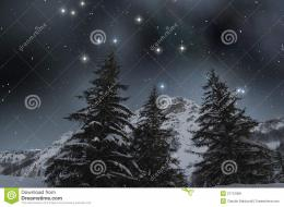 Snow Covered Firs Under A Starry Sky Royalty Free Stock PhotosImage 1639