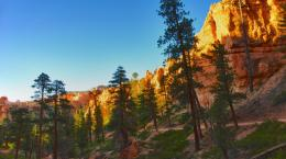 around the world Pine Trees over Hiking Trail in Bryce Canyon 35 1655